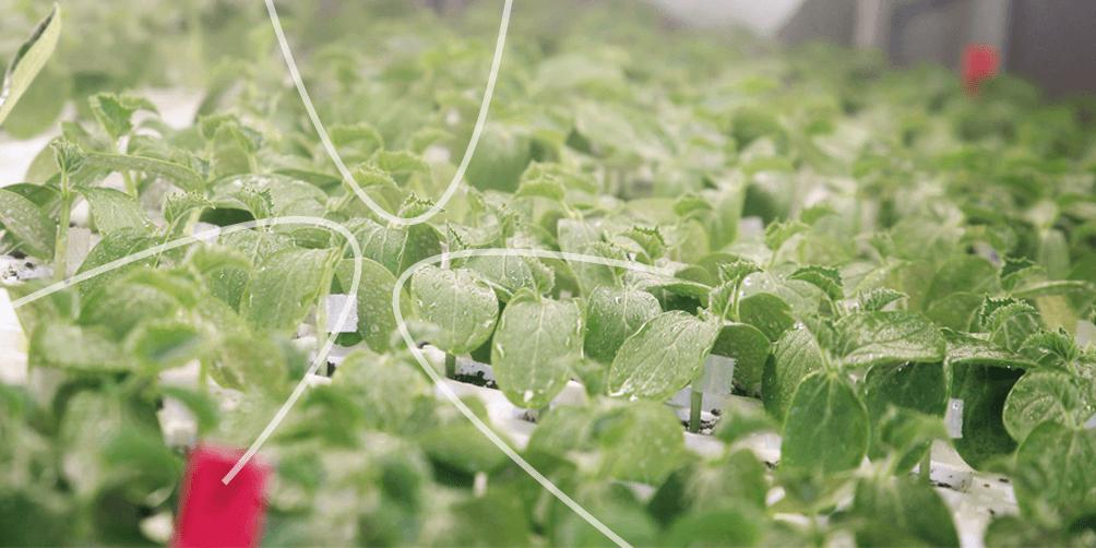 vanderlugt-1004×502-pixels