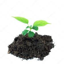 dd-plantje
